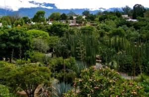 Garden at Jardín Etnobotánico de Oaxaca