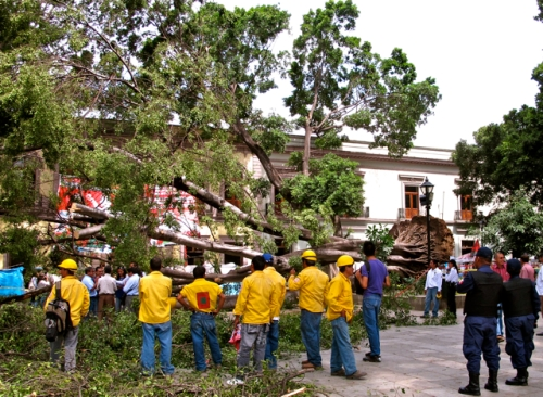 Yellow jacketed workers in front of fallen tree