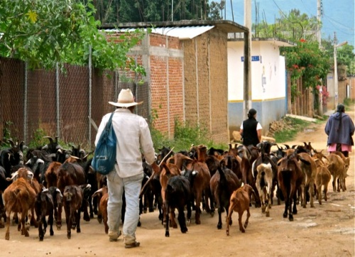Herd of goats and goat herders on a dirt road