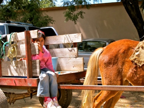 Young girl riding in a horse pulled cart.