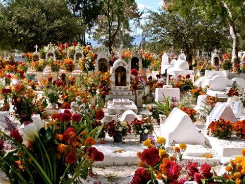 Profusion of flowers against whitewashed graves