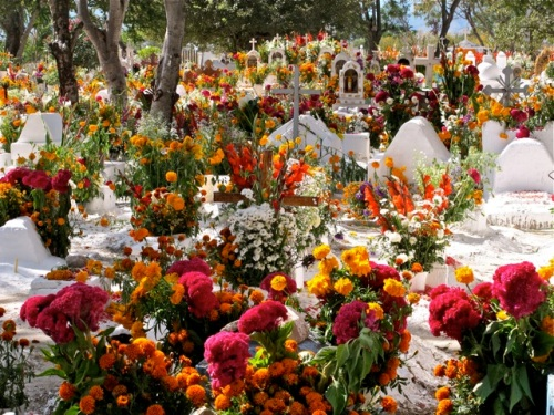 Over view of whitewashed graves and the profusion of flowers