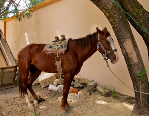 Horse with saddle tied to a tree