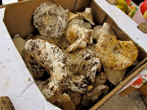 Mushrooms in a box