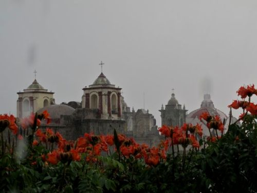 Red/orange African tulip tree blossoms in foreground, church domes and bell towers in background against gray sky