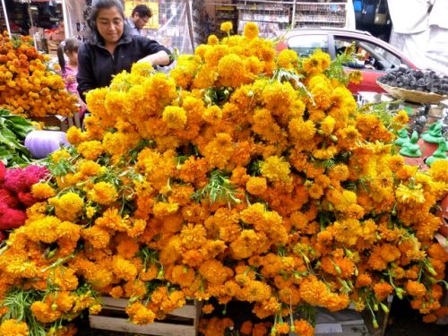 Pile of marigolds