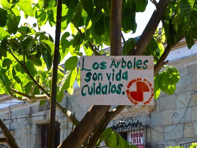 """Sign in tree """"Los arboles son vida cuidalos"""