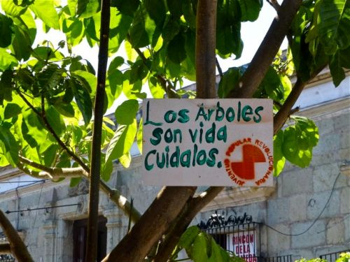 "Sign in tree ""Los arboles son vida cuidalos"