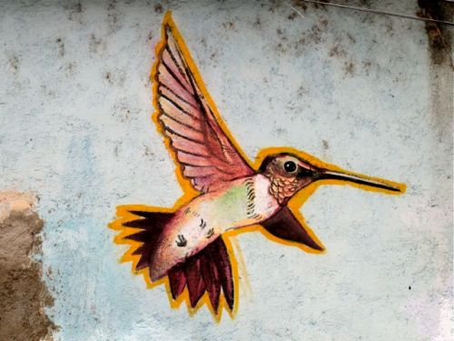 Hummingbird painted on wall