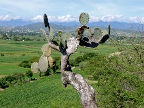 Cactus, farmland, mountains