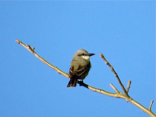 Bird sitting on twig