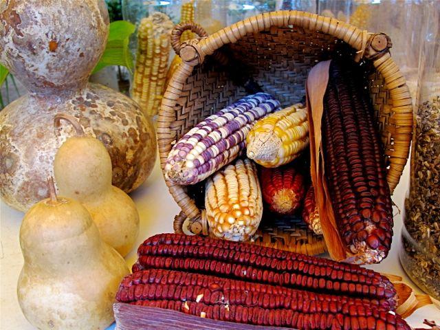 Multicolored corn in basket