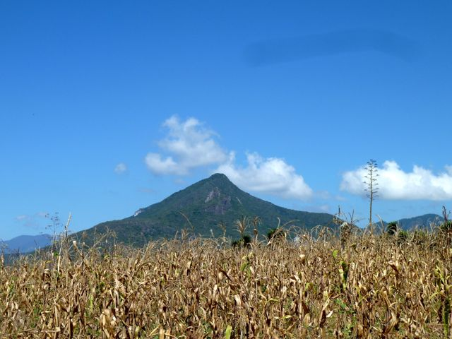 Corn stalks in foreground, El Picacho mountain in background