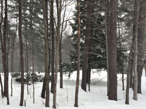 Snow02172014