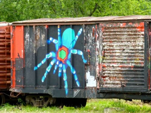 Spider painted on railroad car