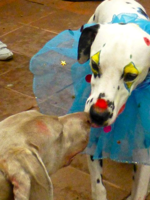 2 dogs nuzzle to nuzzle