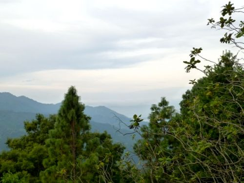 Foreground pine trees; background mountains