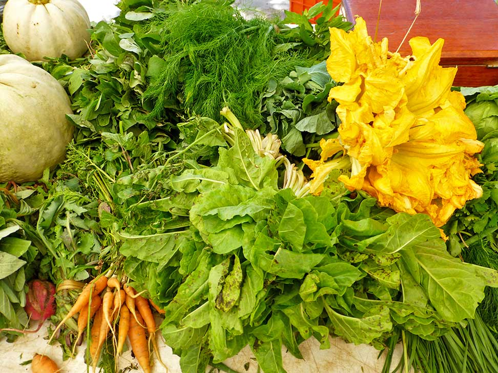 Carrots, lettuce, squash blossoms, fennel, and more.