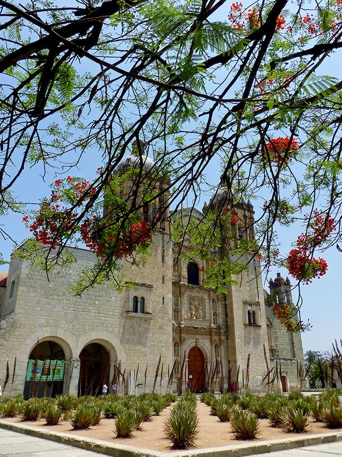 Flamboyant trees, Santo Domingo de Guzmán, and agave