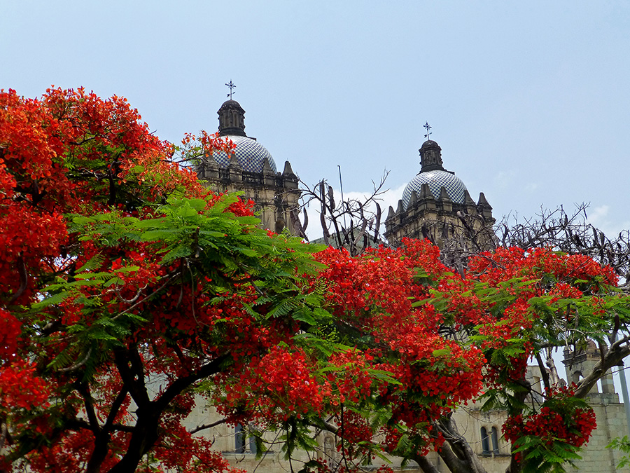 Flamboyant trees and Santo Domingo de Guzmán looking picture perfect.